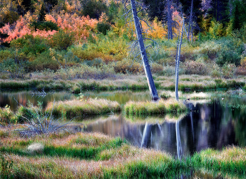 Beaver pond on Mill Creek with fall color. Inyo National Forest. California