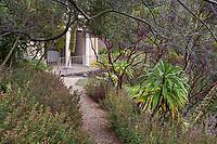 Path through Manzanita and Echium in Blake Garden