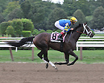 8.15 Positional Limit gallops out in the post parade for the Adirondack.