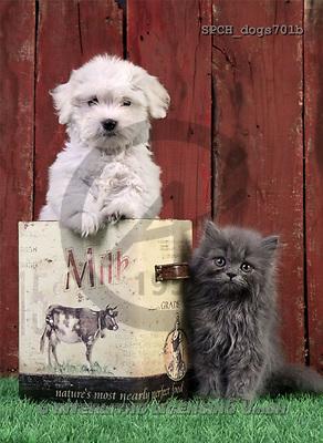 Xavier, ANIMALS, dogs, photos(SPCHdogs701b,#A#) Hunde, perros