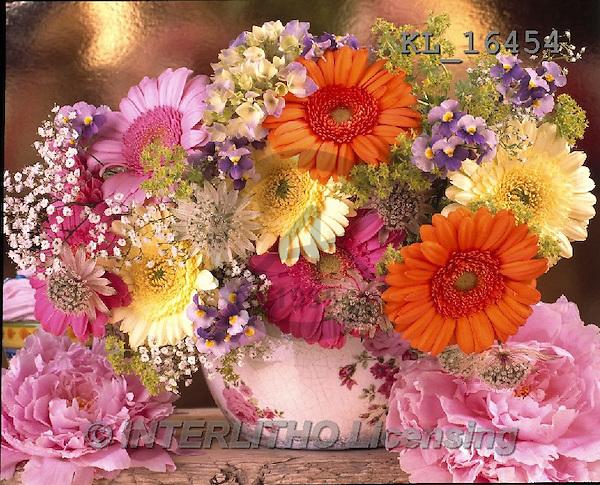Interlitho, FLOWERS, BLUMEN, FLORES, photos+++++,flowers,gerbera,KL16454,#F#