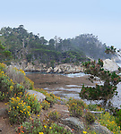 Point Lobos State Reserve, south of Monterey and Carmel, California has stunning Pacific Ocean views, wildlife, hiking, diving, kayaking and biking.