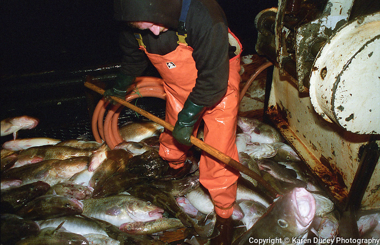 The F/V Windjammer dragging for gray cod in the Bering Sea