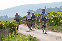 Bikers in the vineyard. Beaune, Cote d'Or, Burgundy, France