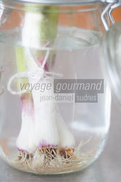 Gastronomie Générale : Oignon nouveau ou oignon frais // General Gastronomy: New onion, Fresh onion,