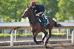 SHA TIN,HONG KONG-DECEMBER 08 : Highland Reel,trained by Aidan O'Brien,exercises in preparation for the Hong Kong Vase at Sha Tin Racecourse on December 8,2017 in Sha Tin,New Territories,Hong Kong (Photo by Kaz Ishida/Eclipse Sportswire/Getty Images)