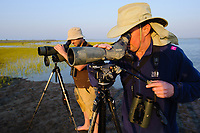 British Birdwatchers Chris Kelly and Ben Mines loooking for Spoon-billed Sandpipers. Rakhine State, Myanmar. January.