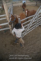 Coming out Cowboys working and playing. Cowboy Cowboy Photo Cowboy, Cowboy and Cowgirl photographs of western ranches working with horses and cattle by western cowboy photographer Jess Lee. Photographing ranches big and small in Wyoming,Montana,Idaho,Oregon,Colorado,Nevada,Arizona,Utah,New Mexico. Fine Art Limited Edition Photography Of American Cowboys and Cowgirls by Jess Lee