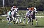 Schiaparelli with Joe Talamo aboard wins the G2  Royal Heroine Mile at Betfair Hollywood Park in Inglewood, California on July 6,2013. (Zoe Metz/ Eclipse Sportswire)