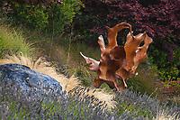 'Teak Orchid' tree root sculpture in Tiburon, California garden