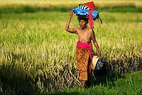 Old women walking in Ricefield, Ubud Area