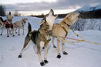Sam Perrino's Dogs Howl to at Takotna Checkpoint<br />2004 Iditarod