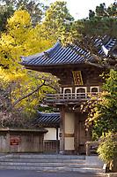 Autumn San Francisco Japanese Tea Garden