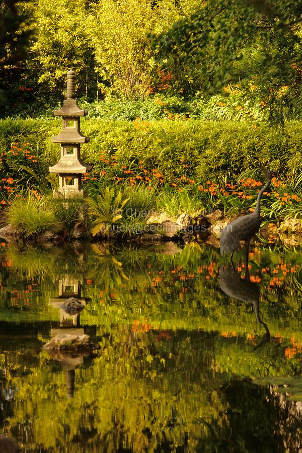 San Francisco, California - Japanese Tea Garden, Golden Gate Park, Reflection in Pond.