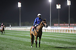 March 27, 2021: DUBAI FUTURE (GB) #2, in the post parade for the Dubai Sheema Classic on Dubai World Cup Day, Meydan Racecourse, Dubai, UAE. Shamela Hanley/Eclipse Sportswire/CSM