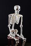 Skinney Skeleton sits for a portrait.  Skeleton sits for a studio portrait.