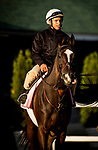LOUISVILLE, KY - MAY 03: Paradise Woods with exercise rider Alex Bisono walks out to the track at Churchill Downs on May 03, 2017 in Louisville, Kentucky. (Photo by Alex Evers/Eclipse Sportswire/Getty Images)