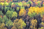 Colorful Hillside in Franconia Notch