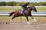 #21 (gallop only)Fasig-Tipton Florida Sale,Under Tack Show. Palm Meadows Florida 03-23-2012