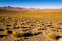 South America, Chile, puna de atacama
