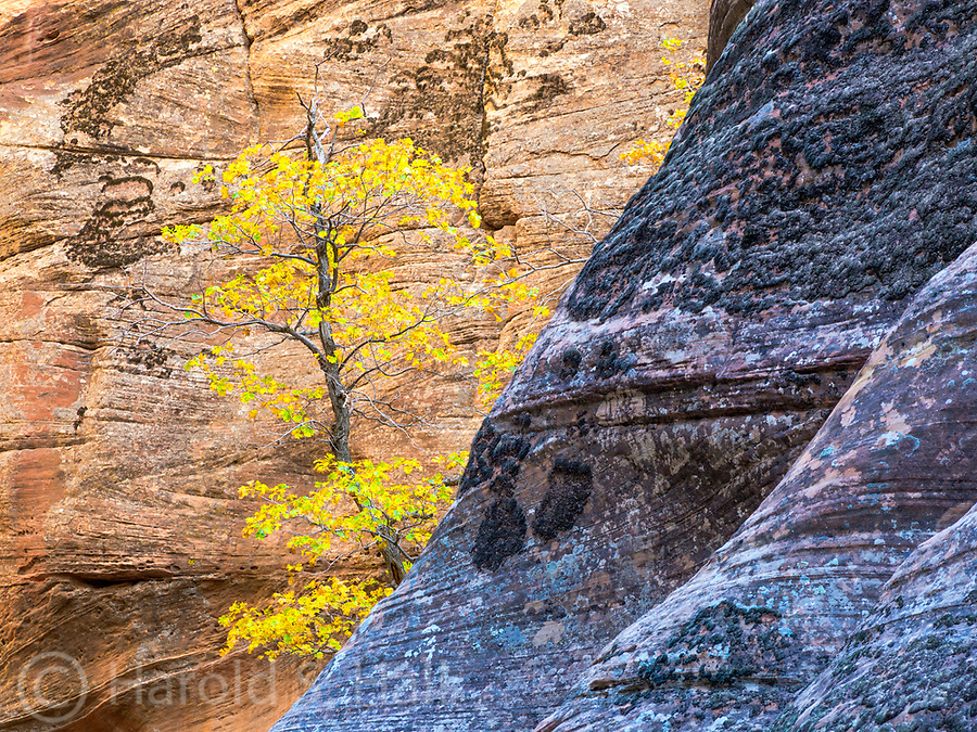 The hike to Observation Point in Zion National Park Utah winds through may of the most scenic areas of the park.