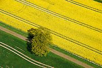 Raps: DEUTSCHLAND, MECKLENBURG-VORPOMMERN 25.04.2007: Raps, Fruehling, Fruejahr, Luftbild, Luftaufname, Luftansicht,  Acker, Ackerbau, Ackerland,  Aufsicht, biotope,  bluehen, bluehend, Bluete, Blueten, Bluetenblaetter, Bluetenblatt, Bluetenpflanze, Bluetenpflanzen, Bluetezeit, Blume, Blumen, Blumenblaetter, Blumenblatt, bunt, Deutschland, Draufsicht, Energie, Energieversorgung, Energiewirtschaft, energy industry, Europa, europaeisch, Europe, European, farbenfreudig, farbenfroh, farbenpraechtig, Feld, Felder, gelbe Bluete, gelbe Blueten, Kreuzbluetler, Kronblaetter, Kronblatt, Kronenblaetter, Kronenblatt, Kulturlandschaft, Kulturlandschaften, Kulturpflanze, Kulturpflanzen, Landschaft, Landschaften, Landschaftsarchitektur, Landschaftsbild, Landschaftselement, Landwirtschaft, Lebensraeume, Lebensraum, Luftaufnahme, Luftaufnahmen, Luftbild, Luftbilder, Mitteleuropa, mitteleuropaeisch, Monokultur, Nutzpflanze, Nutzpflanzen, Oelpflanze, Oelpflanzen, Pflanze, Pflanzen, rape field, rape fields, Raps, Rapsanbau, Rapsfeld, Rapsfelder, Rohstoff, Samenpflanze, Samenpflanzen, Umwelt, ungewohnt, Vogelperspektive, Vogelschau , von oben, yellow flower, yellow flowers, Bio, Biodiesel, Diesel, Treibstoff, alternative Energie, Baum, gruen, gelb, Weg,.c o p y r i g h t : A U F W I N D - L U F T B I L D E R . de.G e r t r u d - B a e u m e r - S t i e g  1 0 2,  .2 1 0 3 5  H a m b u r g ,  G e r m a n y.P h o n e  + 4 9  (0) 1 7 1 - 6 8 6 6 0 6 9 .E m a i l      H w e i 1 @ a o l . c o m.w w w . a u f w i n d - l u f t b i l d e r . d e.K o n t o : P o s t b a n k    H a m b u r g .B l z : 2 0 0 1 0 0 2 0  .K o n t o : 5 8 3 6 5 7 2 0 9.C  o p y r i g h t   n u r   f u e r   j o u r n a l i s t i s c h  Z w e c k e, keine  P e r s o e n  l i c h ke i t s r e c h t e   v o r  h a n d e n,  V e r o e f f e n t l i c h u n g  n u r    m i t  H o n o r a r  n a c h  MFM, N a m e n s n e n n u n g und B e l e g e x e m p l a r