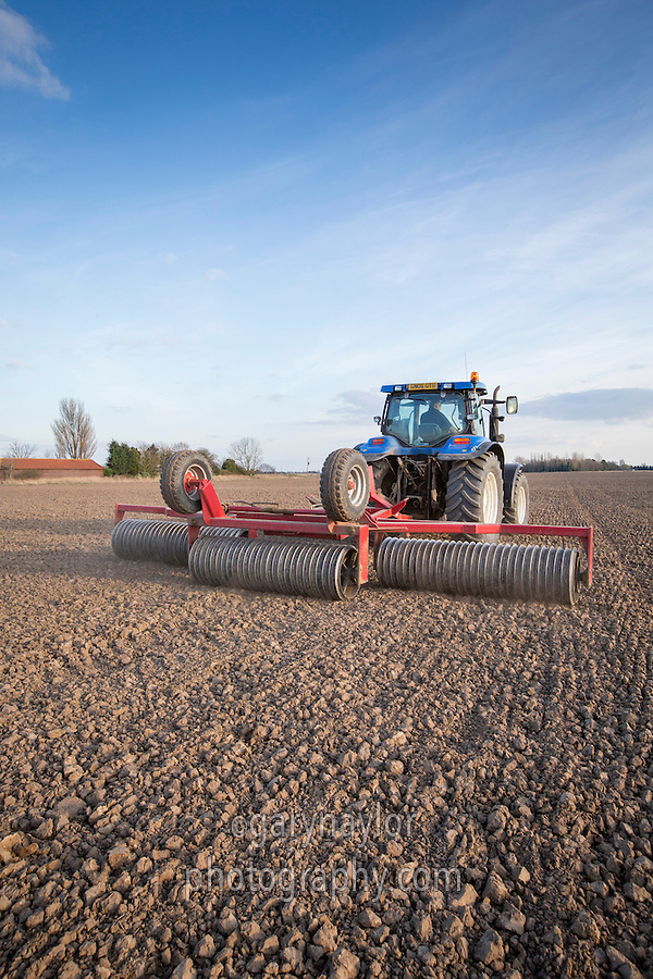 Rolling dry spring wheat seed bed - South Lincolnshire, March