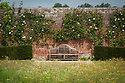 A Lutyens bench and white climbing rose in the walled garden, Audley End, late May.