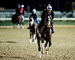 October 31, 2018 : War of Will, trained by Mark E. Casse, exercises in preparation for the Breeders' Cup Juvenile Turf  at Churchill Downs on October 31, 2018 in Louisville, Kentucky. Evers/ESW/Breeders Cup