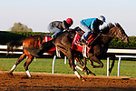 October 21, 2015:  Conquest Daddyo (outside) worked in company for trainer Mark Casse in preparation for the Breeder's Cup .  Candice Chavez/ESW/CSM