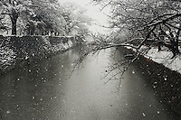 Snow covers the cherry trees and falls into the dark waters of the castle moat, Matsumoto, Nagano, Japan.