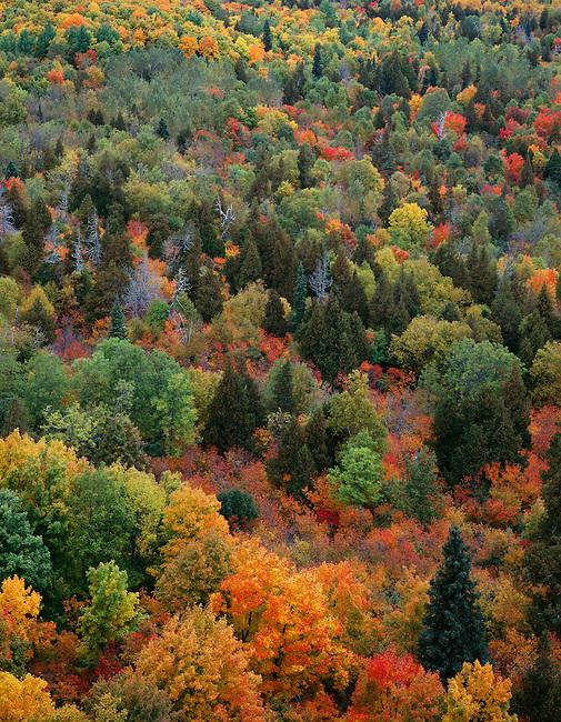Forest scene; Autumn color; Mt. Oberg; Superior National Forest; Minnesota