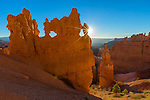 Bryce Canyon National Park, UT: Morning sun in the Bryce Ampitheater backlighting the hoodoos and sandstone pinnacles