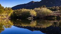 Duck pond in morning light, Southern California Montane Botanic Garden