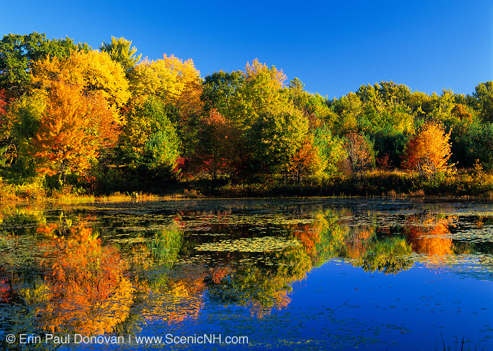 Reflection of fall colors in Clarks Pond in Auburn, New Hampshire USA.