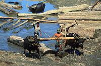 Asie/Birmanie/Myanmar/Haute Birmanie/Mandalay: Buffalo-working sortant du bois de l'eau sur le port