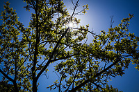 Branches and leaves paint a blue sky with lines and color with a sunburst accent.