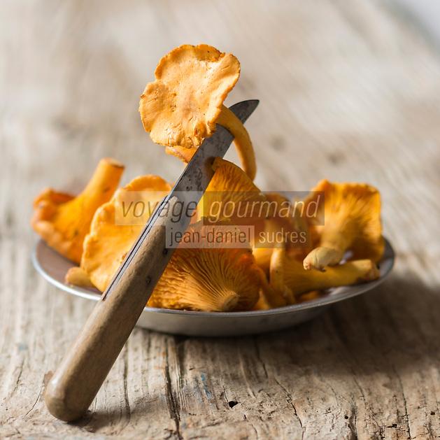 Gastronomie: Girolles francaises