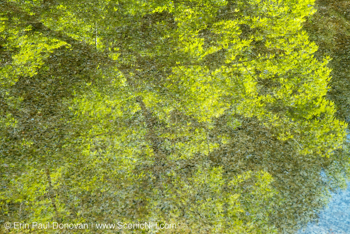 Reflection of spring in the Swift River, which runs along the Kancamagus Highway-Route 112- in the White Mountains, New Hampshire USA
