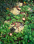 Forest floor, Mogollon Baldys, Gila Wilderness, New Mexico