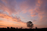 Europa, DEU, Deutschland, Hessen, Niederwalgern, Sonnenaufgang, Daemmerung, Himmel, Wolken, Baum, Morgenstimmung, Kategorien und Themen, Natur, Umwelt, Landschaft, Jahreszeiten, Stimmungen, Landschaftsfotografie, Landschaften, Landschaftsphoto, Landschaftsphotographie, Wetter, Himmel, Wolken, Wolkenkunde, Wetterbeobachtung, Wetterelemente, Wetterlage, Wetterkunde, Witterung, Witterungsbedingungen, Wettererscheinungen, Meteorologie, Bauernregeln, Wettervorhersage, Wolkenfotografie, Wetterphaenomene, Wolkenklassifikation, Wolkenbilder, Wolkenfoto....[Fuer die Nutzung gelten die jeweils gueltigen Allgemeinen Liefer-und Geschaeftsbedingungen. Nutzung nur gegen Verwendungsmeldung und Nachweis. Download der AGB unter http://www.image-box.com oder werden auf Anfrage zugesendet. Freigabe ist vorher erforderlich. Jede Nutzung des Fotos ist honorarpflichtig gemaess derzeit gueltiger MFM Liste - Kontakt, Uwe Schmid-Fotografie, Duisburg, Tel. (+49).2065.677997, ..archiv@image-box.com, www.image-box.com]