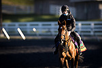 Tarnawa, trained by Dermot K. Weld, exercises in preparation for the Breeders' Cup Turf at Keeneland 11.03.20.