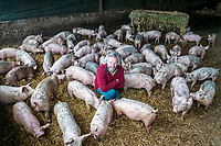 BNPS.co.uk (01202 558833)<br /> Pic: MaxWillcock/BNPS<br /> <br /> Pictured: Robert Shepard with his pigs.<br /> <br /> A pig farmer is closing his business after over 50 years due to the staffing crisis within the industry.<br /> <br /> Robert Shepherd, 58, a second generation farmer, faces culling 10,000 pigs in the coming weeks due to a drastic shortage of abattoir workers.<br /> <br /> Mr Shepherd usually sends 400 pigs to market a week but they are now backing up at his 2,000 acre Allenford Farm in Damerham, near Fordingbridge, Hants, due to the lack of butchers and HGV drivers to transport them.<br /> <br /> He said the staffing crisis has been the final straw following pressure put on his business due to Covid and he is now closing his pig farm that has been going since 1963.