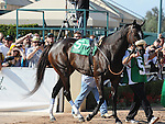 October 2, 2010.Zneyatta in the paddock before winning The Lady's Secret Stakes at Hollywood Park, Inglewood, CA._Cynthia Lum/Eclipse Sportswire.com