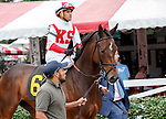 Prognostication  (no. 6) wins Race 1 Aug. 11, 2018 at the Saratoga Race Course, Saratoga Springs, NY.  Ridden by  Javier Castellano, and trained by Chad Brown,  Prognostication finished 2 1/4 lengths in front of Lemonist (no. 1).  (Bruce Dudek/Eclipse Sportswire)