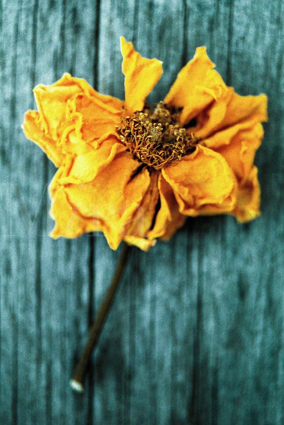 Dried flower.