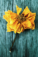 Dried flower.