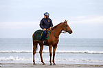 August 14, 2021, Deauville (France) - Racehorse after training at the beach in Deauville. [Copyright (c) Sandra Scherning/Eclipse Sportswire)]