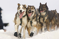 Michael Suprenant's lead dogs crest the Cordova hill.in Anchorage during the 2008 Iditarod ceremonial start