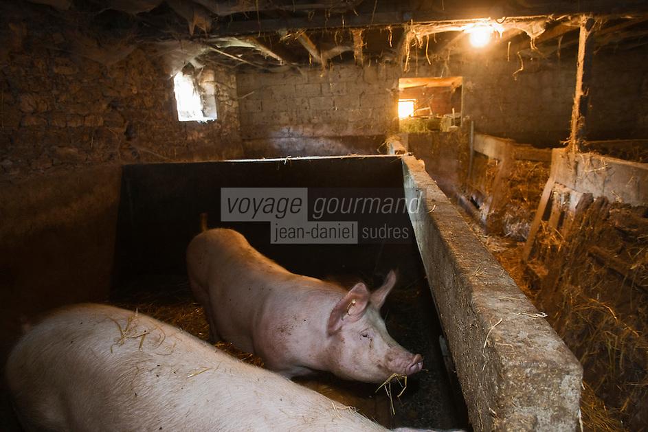 Europe/France/Midi-Pyrénées/46/Lot/ Elevage de cochon de Julien Dale